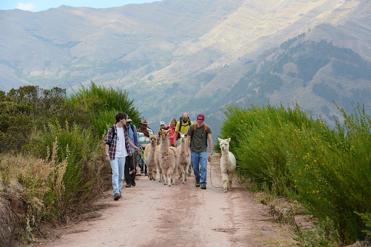 Chinchero Nature Walk With Llamas And Alpacas Tour