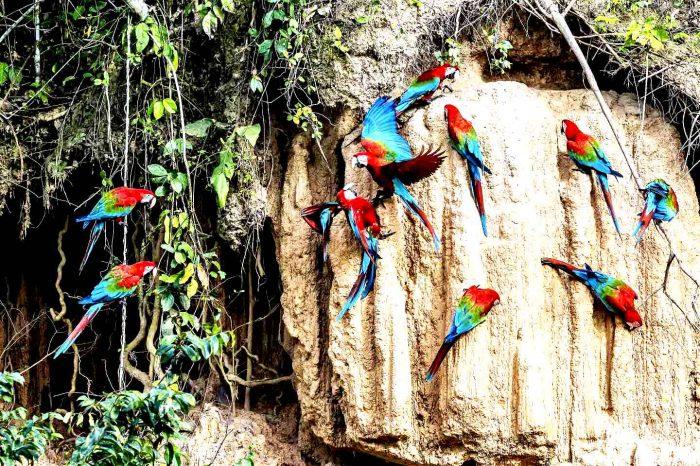 Manu National Park 6D/5N – Amazon Rainforest Peru