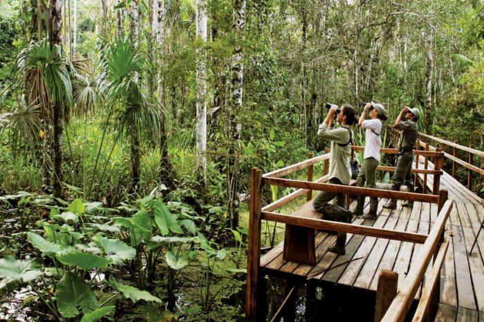 4 Day Manu Amazon Rainforest Tour