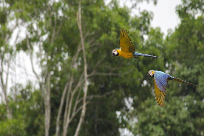 3D/2N Manu National Park Review Our Amazon Tour
