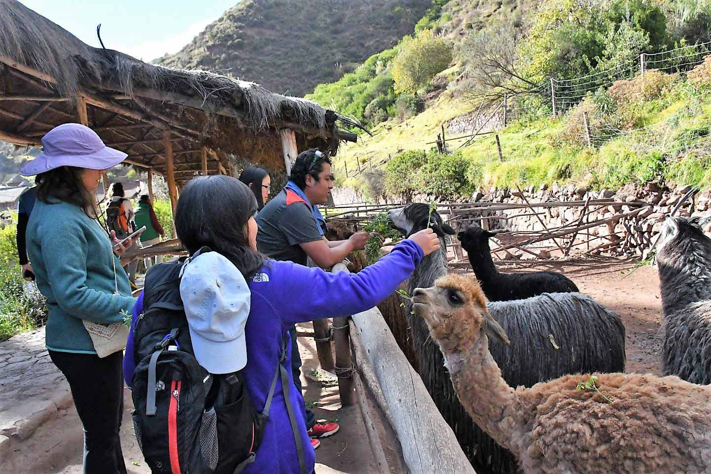 Sacred Valley Tour Leaders Peru