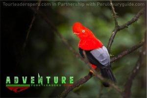Lima Tour Peru Explore