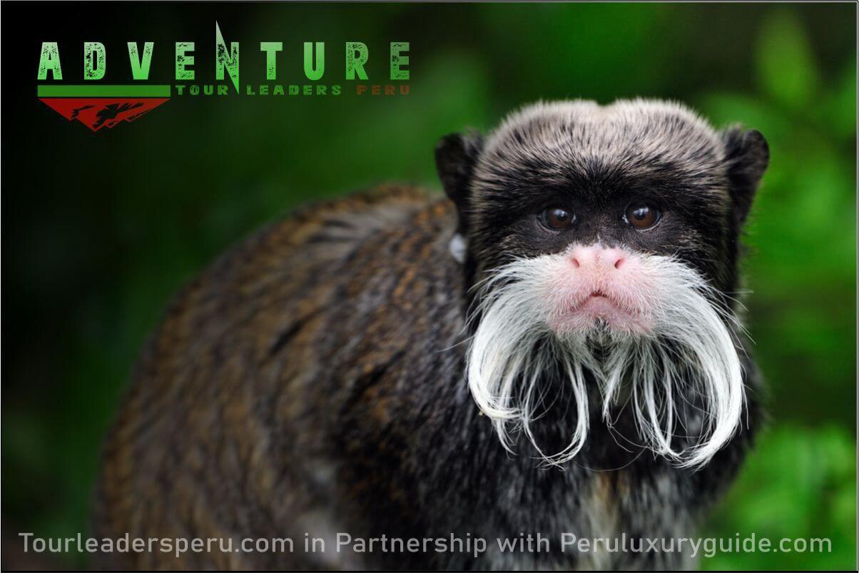 Manu Jungle Tour Peru 6 Days